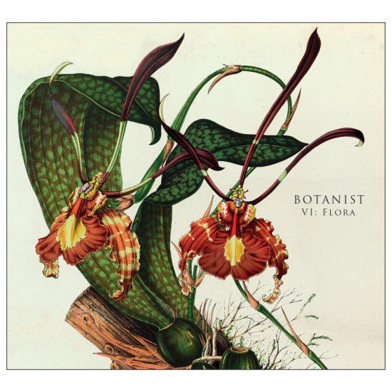 Botanist VI Flora